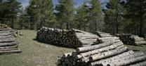La Delegación Territorial de Medio Ambiente y Ordenación del Territorio en Almería saca a licitación tres lotes de madera de la Sierra de los Filabres