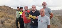Medio Ambiente libera un ejemplar de águila perdicera en el paraje Sierra Lisbona, en Antas
