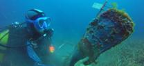 La Junta detecta en el litoral almeriense una mortandad masiva de Pinna nobilis, un molusco endémico del Mediterráneo