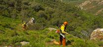 Medio Ambiente licita obras forestales dirigidas a empresas del sector por un importe de 5,4 millones de euros