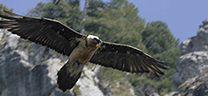 Andalucía celebra el Día Mundial de las Aves con actividades de iniciación a la ornitología en los espacios naturales