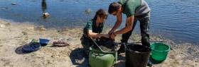La Consejería Medio Ambiente rescata 1.800 anguilas en peligro de asfixia en el río Cachón, en Cádiz