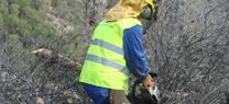 La Junta comienza los trabajos para restaurar la cubierta vegetal del pinar de Alhama de Almería