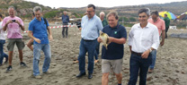 Liberados en San Roque tres ejemplares de tortuga boba recuperados en el Cegma de Algeciras