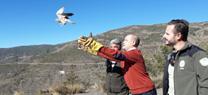 Medio Ambiente libera a sendos ejemplares de búho real y cernícalo en la Sierra de los Filabres en Almería