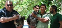 Medio Ambiente libera en la Sierra de Castril dos quebrantahuesos nacidos en la Red Europea de Cría en Cautividad