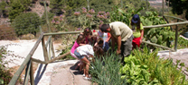 21.000 visitantes conocen el valor de conservar la flora en los dos jardines botánicos gestionados por la Junta en Almería
