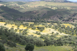 Dehesa de Andalucía