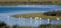 Acuíferos en Doñana