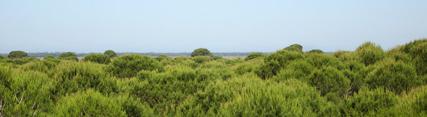 La Junta inicia las acciones legales para paralizar el proyecto de almacenamiento de gas en Doñana