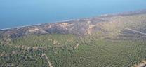 Medio Ambiente suspendió de actividad de la carbonera de Moguer el pasado 21 de julio