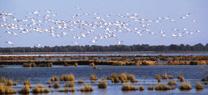 Medio Ambiente pone en marcha una campaña informativa sobre el Espacio Natural de Doñana