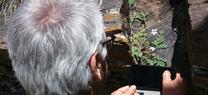 Personal de Medio Ambiente de la Junta localiza una nueva población de Erodium rupicola en la sierra de Los Filabres