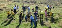 Escolares de Cájar colaboran en una reforestación