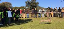 Comienza en Jaén la campaña de liberación de ejemplares de lince ibérico para mejorar genéticamente la especie