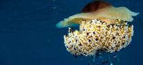 Imagen de un fondo marino de nuestras costas.