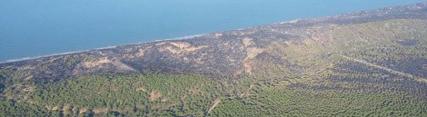 La Junta inicia los trabajos de restauración de la zona afectada por el incendio de Las Peñuelas
