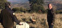 La Junta realiza la suelta de dos buitres leonados y un azor en el Parque Natural de Despeñaperros, atendidos en el CREA de Jaén