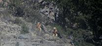 Medio Ambiente confirma la segunda puesta del año de una pareja de quebrantahuesos en el medio natural