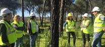 La Junta restaura los montes de Aljaraque, Cartaya y Gibraleón afectados por incendios de 2014 y 2015