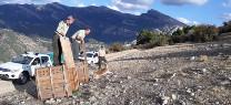 Medio Ambiente realiza controles a una treintena de cabras montesas y suelta tres ejemplares en Cazorla, Segura y Las Villas