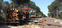 Medio Ambiente fomenta la economía verde con el aprovechamiento sostenible de la madera de montes públicos