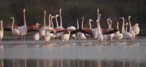 Medio Ambiente confirma la reproducción de más de 61.000 parejas de aves acuáticas en 155 humedales de Andalucía