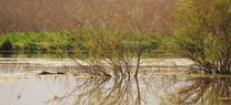 Andalucía incluye 83 nuevos humedales en el Inventario Español de Zonas Húmedas