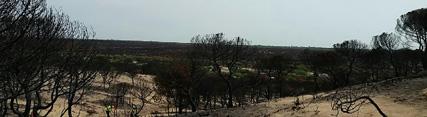 La Junta destina 2,99 millones a nuevas obras urgentes para recuperar la zona del incendio de Las Peñuelas