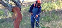 La Junta comienza los trabajos para prevenir incendios forestales en 2.028 hectáreas en la provincia de Córdoba