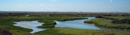 Parque Natural de la Bahía de Cádiz