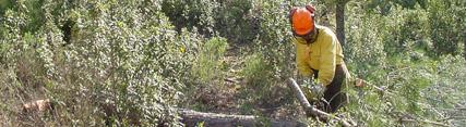 La Junta invertirá 110 millones de euros para la mejora del medio forestal andaluz en los próximos tres años