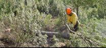 Medio Ambiente licita el tercer lote de obras forestales en  montes públicos por un importe de 5,92 millones de euros