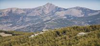 El Plan de Gestión Integral de los montes públicos de la Sierra de los Filabres generará 84.000 jornales directos