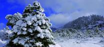 El Gobierno andaluz aprueba la propuesta inicial para la declaración de la Sierra de las Nieves como Parque Nacional