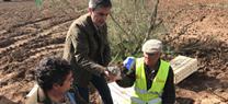 La Junta libera 50 conejos en el monte público La Nava para recuperar las poblaciones de la especie y mejorar la biodiversidad