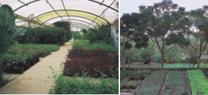 La red de viveros de Medio Ambiente alcanza un producción de 15 millones de plantas autóctonas en los últimos diez años