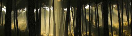 Bosque de Andalucía