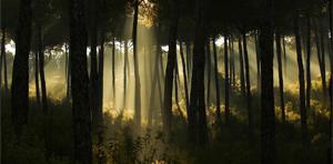 La Junta anuncia la adecuación del Plan Forestal y un importante