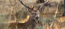 La Junta publica los periodos hábiles de caza para la temporada 2019/2020
