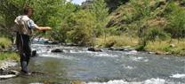 Medio Ambiente permite tramitar por internet las licencias de caza y pesca continental en Andalucía