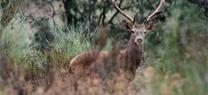 Medio Ambiente pone en marcha un proyecto para la gestión de ungulados silvestres en el Parque Nacional de Sierra Nevada