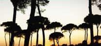 Pinar en Doñana