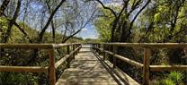 Los trabajadores del Parque de Doñana reciben la medalla de Andalucía en el año de su 50 aniversario