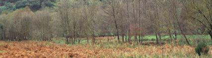 El Parque Natural Sierra Norte de Sevilla será la sede la 15ª Conferencia Europea de Geoparques