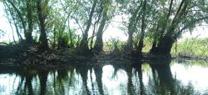 La Junta contempla en el Plan Hidrológico del Tinto-Odiel-Piedras una reserva de 15hm3 para su trasvase a la cuenca del Guadalquivir
