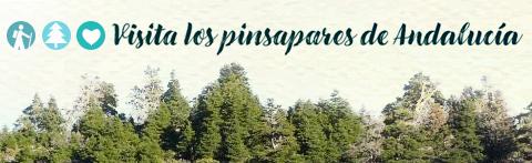 Banner de acceso al contenido Visita los pinsapares de Andalucía