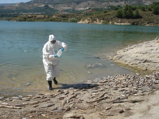 Mortandad de carpas, toma de muestras biológicas y de agua