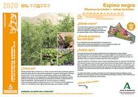 La planta del mes: Junio 2020. Red Andaluza de Jardines Botánicos y Micológicos en Espacios Naturales (se puede consultar accediendo a cada Jardín)