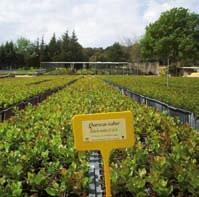 Jardín Botánico 'Las Tobas y Alberquillas'